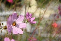Κόσμος λουλουδιών Στοκ εικόνες με δικαίωμα ελεύθερης χρήσης