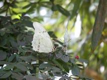 κόσμος της Φλώριδας πεταλούδων Στοκ Φωτογραφίες