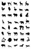 Κόσμος του ζώου Στοκ Εικόνες