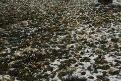 Κόσμος του πάγου - παγωμένα μήλα στο έδαφος στοκ εικόνα