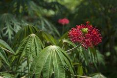 Κόστα Ρίκα Στοκ εικόνα με δικαίωμα ελεύθερης χρήσης