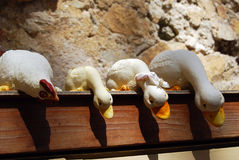 κότα νεοσσών Στοκ εικόνα με δικαίωμα ελεύθερης χρήσης