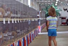 κότες κοριτσιών Στοκ εικόνα με δικαίωμα ελεύθερης χρήσης