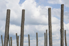 Κόψτε τα δέντρα Στοκ φωτογραφία με δικαίωμα ελεύθερης χρήσης