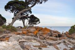 Κόλπος αποθηκών: Πορτοκαλής γρανίτης με τα παράκτια δέντρα Στοκ φωτογραφία με δικαίωμα ελεύθερης χρήσης