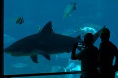 Κόλπος καρχαριών στο παγκόσμιο Gold Coast Queensland Αυστραλία θάλασσας Στοκ εικόνα με δικαίωμα ελεύθερης χρήσης