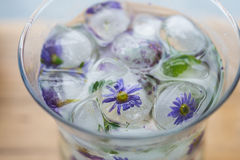 Κύβοι πάγου με τα λουλούδια Στοκ Φωτογραφίες