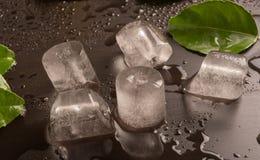Κύβοι πάγου με το φύλλο Στοκ Εικόνες