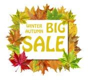 Κύβος με τα φύλλα φθινοπώρου γύρω και τη μεγάλη πώληση χειμερινού φθινοπώρου λέξης Στοκ Φωτογραφία