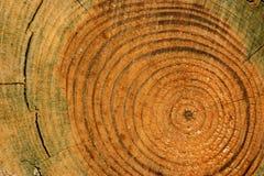 κύκλοι ηλικίας Στοκ Φωτογραφία