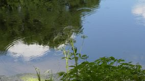 Κύκλοι στο νερό στη δασική λίμνη φιλμ μικρού μήκους