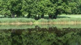 Κύκλοι στο νερό στη δασική λίμνη απόθεμα βίντεο
