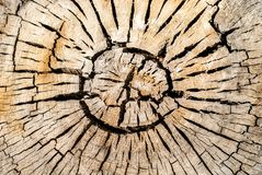 Κύκλοι Vree Στοκ Εικόνες