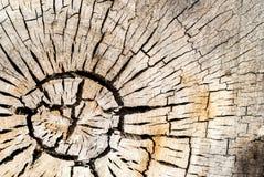 Κύκλοι Vree Στοκ εικόνα με δικαίωμα ελεύθερης χρήσης