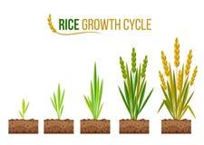 Κύκλος 5 αύξησης ρυζιού διανυσματικό σχέδιο βημάτων διανυσματική απεικόνιση