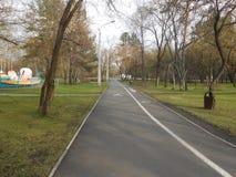 Κύκλος στο πάρκο για να περπατήσει τους ανθρώπους κοντά στα δέντρα και τη χλόη Στοκ Φωτογραφία
