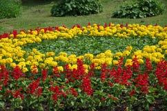 Κύκλος των λουλουδιών στοκ φωτογραφία με δικαίωμα ελεύθερης χρήσης