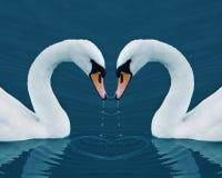 κύκνοι δύο καρδιών Στοκ φωτογραφία με δικαίωμα ελεύθερης χρήσης