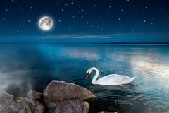 Κύκνοι στη λίμνη Στοκ Φωτογραφίες