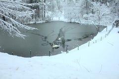 Κύκνοι στη χιονώδη λίμνη στοκ φωτογραφίες