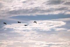 Κύκνοι στον ουρανό Στοκ εικόνα με δικαίωμα ελεύθερης χρήσης
