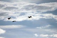 Κύκνοι στον ουρανό Στοκ φωτογραφίες με δικαίωμα ελεύθερης χρήσης