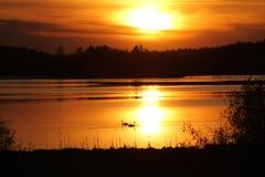 Κύκνοι στο ηλιοβασίλεμα Στοκ Φωτογραφία