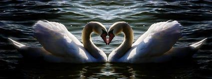 κύκνος καρδιών Στοκ Εικόνες
