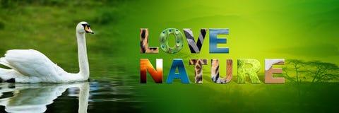 Κύκνος με τη φύση αγάπης κειμένων Στοκ Εικόνα