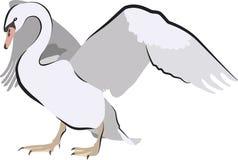 Κύκνος που διαδίδει τα φτερά για έναν χορό ερωτοτροπίας διανυσματική απεικόνιση