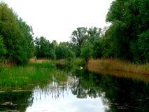 Κύκνος πράσινο να περιβάλει Στοκ Εικόνες