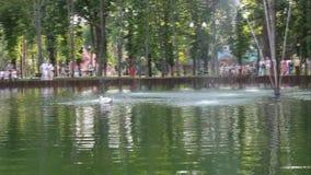 Κύκνος σε μια λίμνη με μια πηγή στο πάρκο φιλμ μικρού μήκους