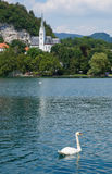 Κύκνος σε μια λίμνη στοκ εικόνες με δικαίωμα ελεύθερης χρήσης