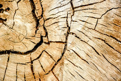 Κύκλοι δέντρων Στοκ εικόνες με δικαίωμα ελεύθερης χρήσης