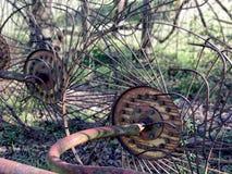 Κύκλος και κύκλος Στοκ εικόνες με δικαίωμα ελεύθερης χρήσης