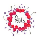 Κύκλος των juicy φρούτων απεικόνιση αποθεμάτων
