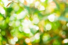 Κύκλος Bokeh φύσης Στοκ εικόνες με δικαίωμα ελεύθερης χρήσης