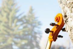 Κύλινδρος βιολοντσέλων υπαίθρια στο πάρκο την ημέρα φθινοπώρου πτώσης με το χρώμα στοκ εικόνα