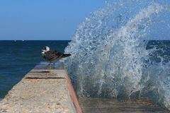 Κύματα, ένας κυματοθραύστης και seagulls Στοκ εικόνα με δικαίωμα ελεύθερης χρήσης