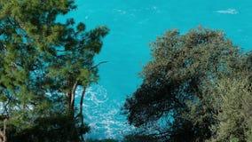 Κύματα θάλασσας στην παραλία Δέντρα και θάλασσα κύματα θάλασσας στην παραλία φιλμ μικρού μήκους