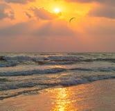 Κύματα θάλασσας και seagull μύγες στα πλαίσια της ρύθμισης του ήλιου Στοκ εικόνες με δικαίωμα ελεύθερης χρήσης