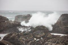 Κύματα που συντρίβουν κοντά στις σφραγίδες σε Καλιφόρνια στοκ εικόνα με δικαίωμα ελεύθερης χρήσης