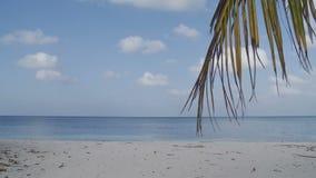 Κύματα σε μια τροπική παραλία με το φοίνικα απόθεμα βίντεο