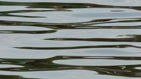 Κύματα στη λίμνη απόθεμα βίντεο