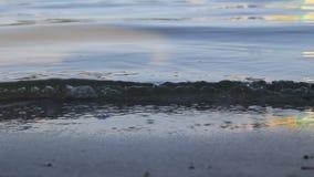 Κύματα στο νερό στη λίμνη απόθεμα βίντεο