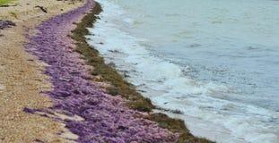 Κύματα του χρώματος Στοκ φωτογραφία με δικαίωμα ελεύθερης χρήσης