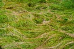 κύματα χλόης Στοκ Φωτογραφίες