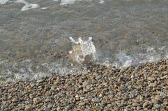 Κύμα θάλασσας στην ακτή μιας παραλίας χαλικιών, νερό, αφρός, υπόβαθρο Στοκ Φωτογραφίες