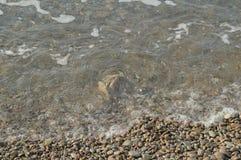 Κύμα θάλασσας στην ακτή μιας παραλίας χαλικιών, νερό, αφρός, υπόβαθρο Στοκ Εικόνες