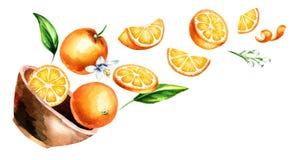 Κύπελλο με τα πορτοκάλια Συρμένη χέρι οριζόντια απεικόνιση watercolor, στο άσπρο υπόβαθρο απεικόνιση αποθεμάτων